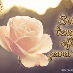 Imágenes de Rosas de Amor rosa blanca