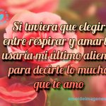 Imagenes de Rosas Hermosas rosas rosada