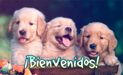 bienvenida a pagina de perritos