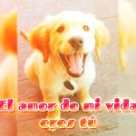 Bonita declaración de amor con imagen de perrito