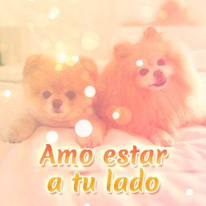 Bonita foto de amor con perritos y frase corta