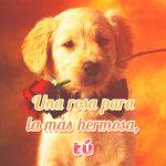 Bonita frase corta de amor con imagen de perrito tierno