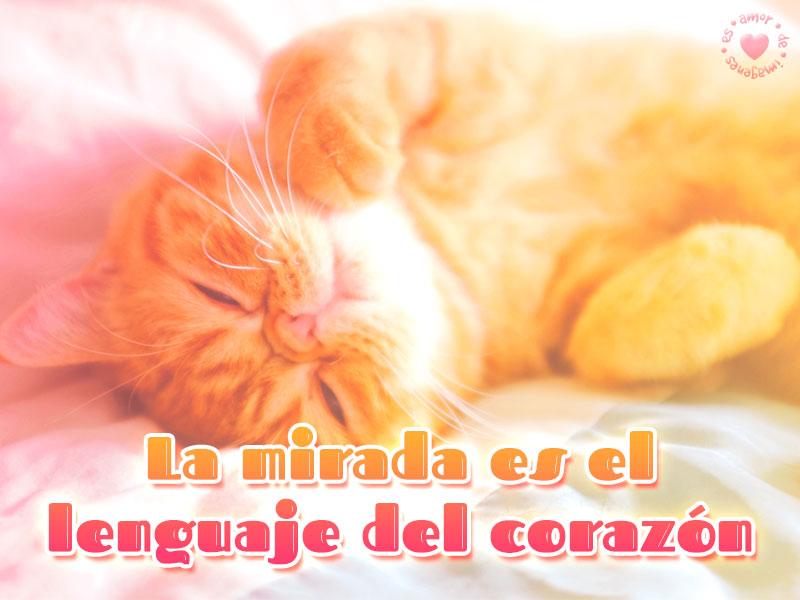 Bonita imagen de amor con gatito
