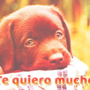 Bonita imagen de amor de perrito con frase te quiero mucho