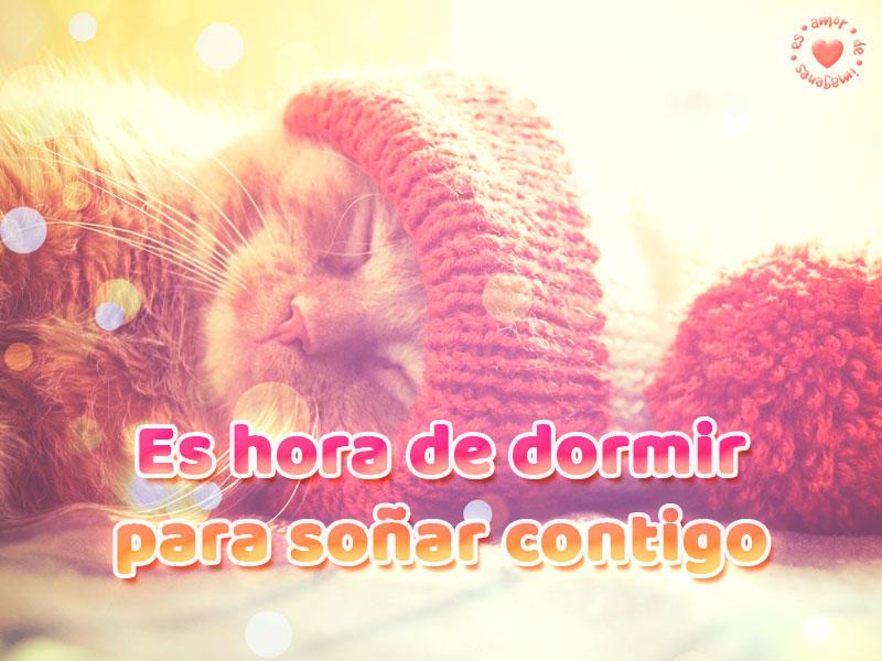 Bonita imagen de gatito con frase de buenas noches de amor