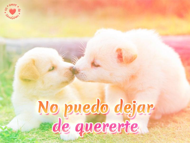Bonita postal de perritos con frase de amor