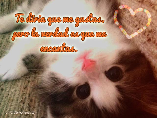 bonito gatito con frase de amor