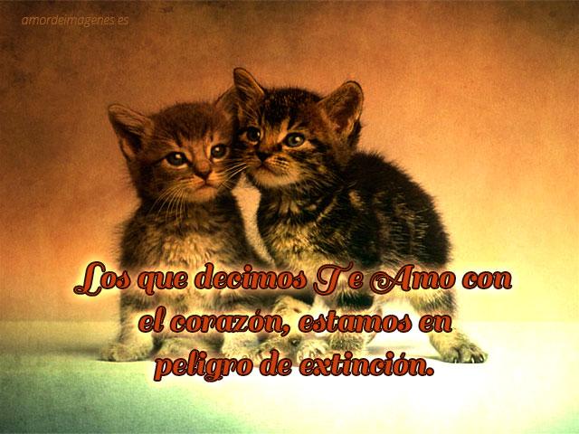 bonitos gatitos con frase de amor