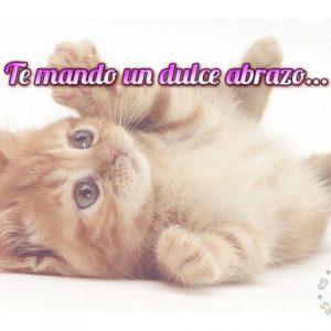frase de amor corta con imagen de gato