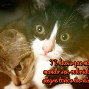 gatiso enamorados con frase de amor