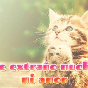 Gatito de amor con frase de extrañar