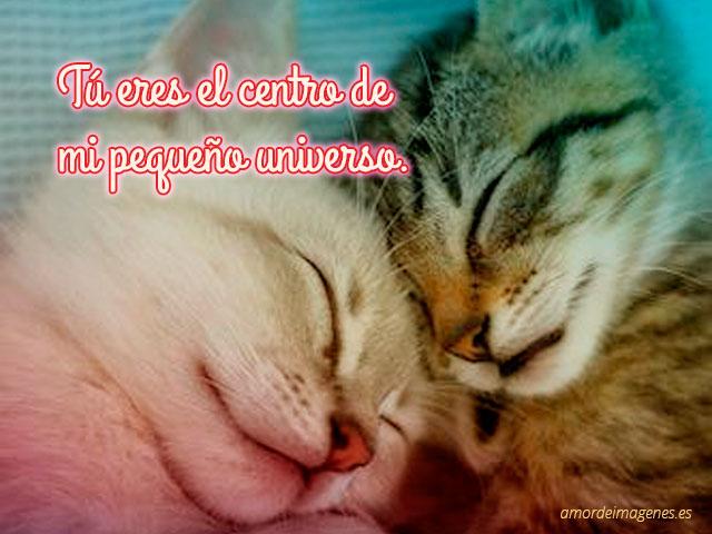 gatos acurrucados con frase de amor