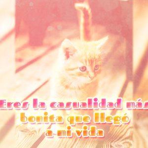 Hermosa foto de gatito enamorado con frase de amor