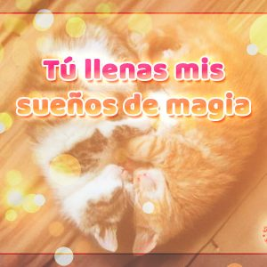 Hermosa pareja de gatos durmiendo con frase de buenas noches de amor