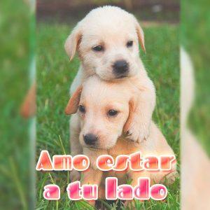 Hermosos perritos con frase de amor