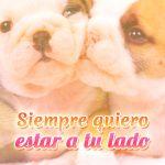 Imagen de amor bulldogs enamorados