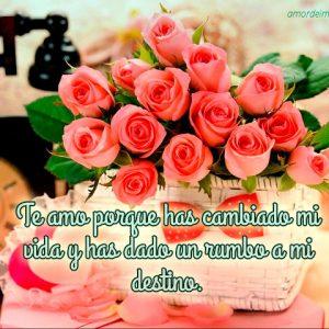 Imagen de amor con rosas y frase bonita