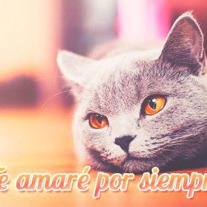 Imagen de amor de gatito con frase