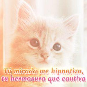 Imagen de amor de gatito con frase para enamorar