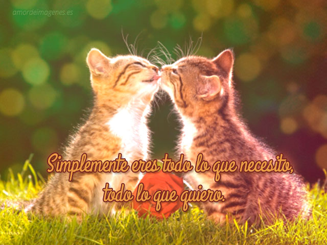 Imagen de besito de gatos con frase de amor