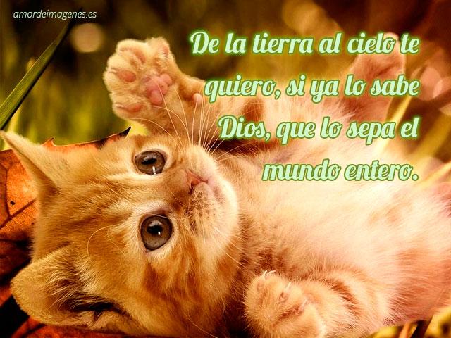 imagen de gatito con frase de amor