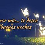 Imagen de mariposas en la noche frases de buenas noches