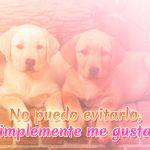 Imagen de perritos con efectos y frase de amor