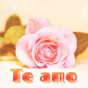 Imagen de rosa con frase te amo