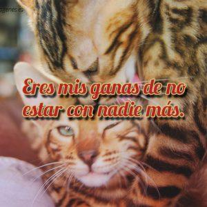 imagen-gatitos-carinosos-con-frase