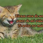 Imagen Graciosa de Gatito Sonriendo imágenes de amor chistosas