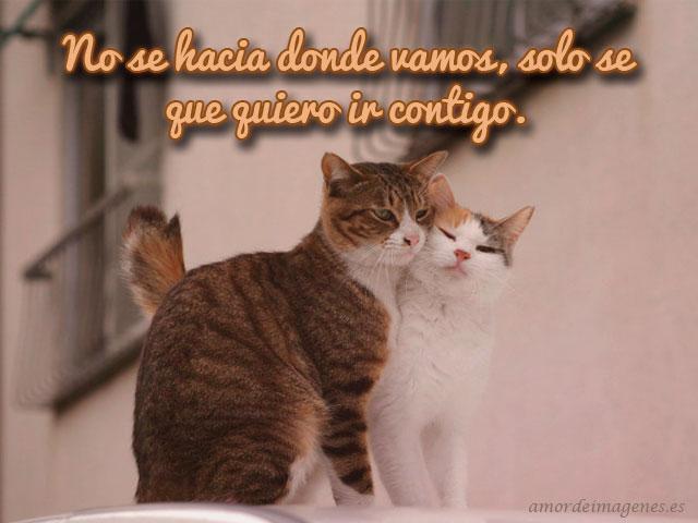 imagen-pareja-gatitos