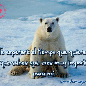 imagenes-bonitas-de-animales-oso-polar