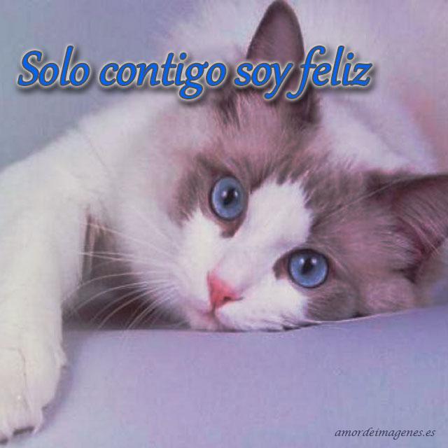 imagenes-de-amor-con-gatitos-lindos-contigo-soy-feliz