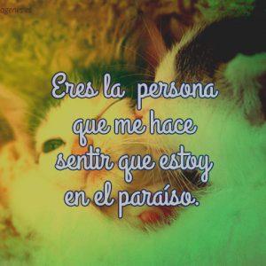 imagenes-de-amor-con-gatitos-para-facebook-tiernos
