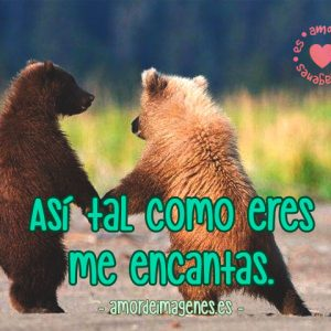 imagenes-de-ositos-con-frases-de-amor-osos-pardos