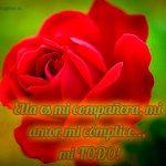 imagenes-de-rosas-con-frases-de-amor-fondo-verde
