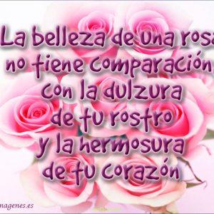 imagenes-de-rosas-con-frases-de-amor-ramo-rosado