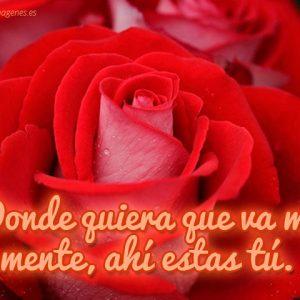 imagenes-de-rosas-con-frases-de-amor-rosa-roja (1)