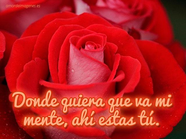 Imagenes Con Frases D Amor En 3d: Imágenes De Rosas Hermosas Para Compartir