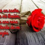 imagenes-de-rosas-con-frases-de-amor-rosa-roja-sola