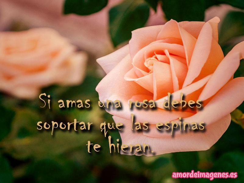50 Imagenes De Rosas Amor Frases Tarjetas Rosas