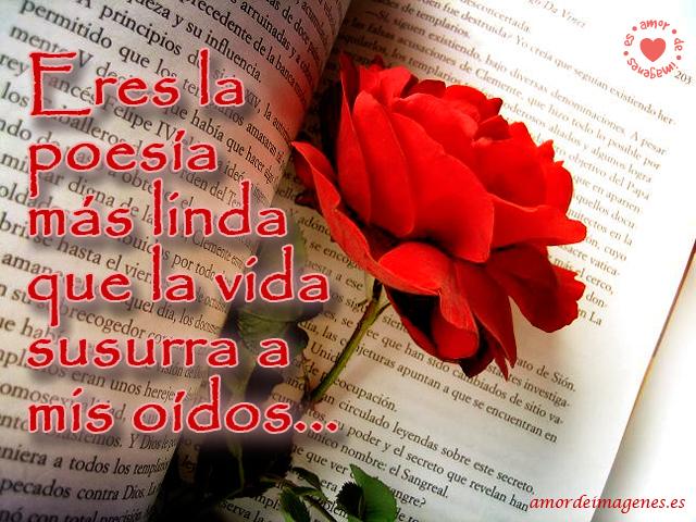 Imágenes De Rosas Hermosas Para Compartir