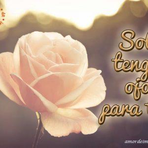 50imágenes De Rosas Amor Frases Tarjetas Rosas