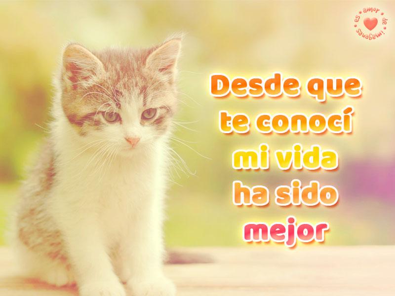 Linda imagen de amor de gatito con frase corta para enamorar