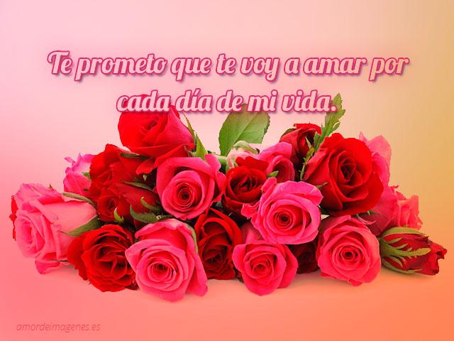 Lindas rosas con frase de amor