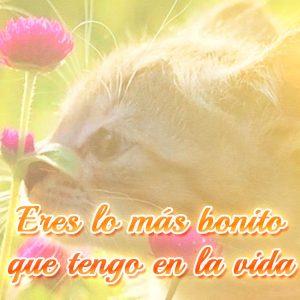 Lindo mensaje de amor con imagen de gato con flor