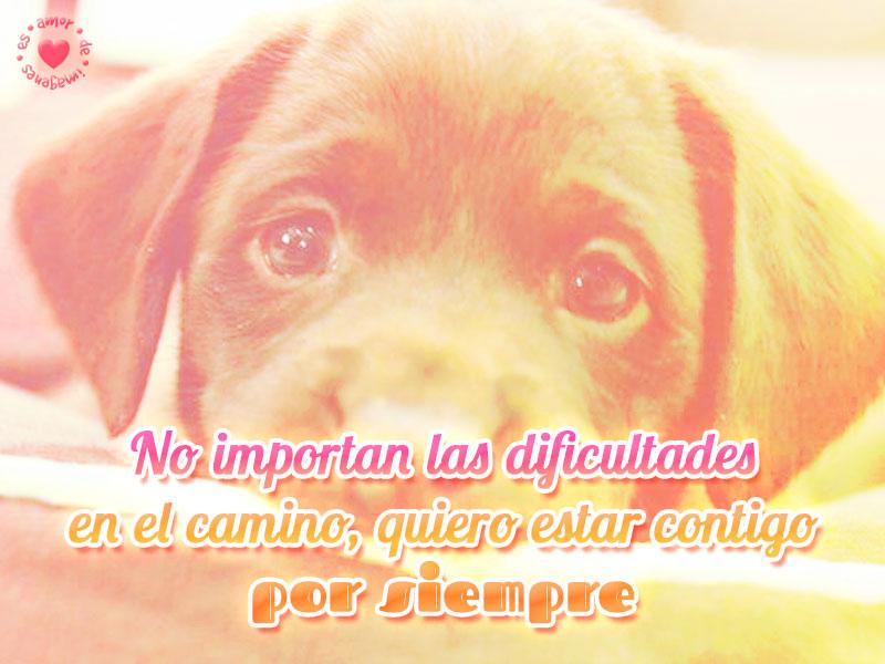 Lindo perrito con frase de amor eterno