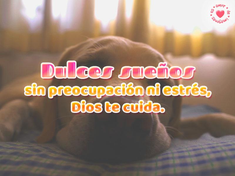 Lindo perro durmiendo con frase de buenas noches