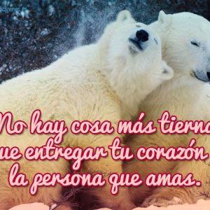 osos-polares-con-frase-de-amor