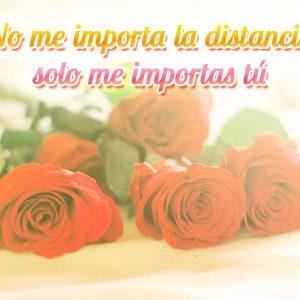 Preciosa imagen de rosas con frase de amor